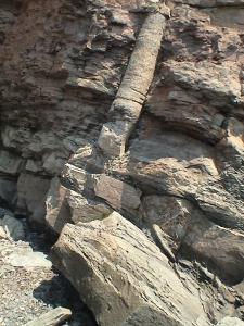 polistratni fosili