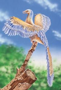 archaeopteryx, domnevni vmesni člen