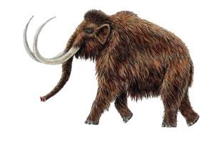 mamut, ledena doba